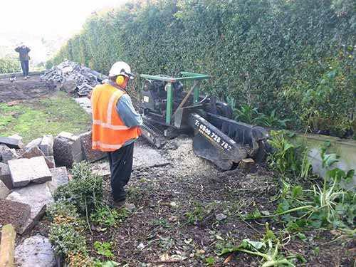 removing-stumps