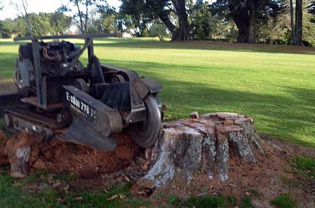Tree Stump Removalstumpgrinder Get Rid Of Stumps
