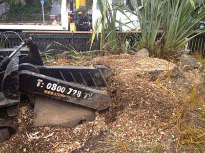 removing-tree-stumps