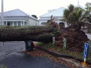 Fallen Tree Stump Grinding Cost