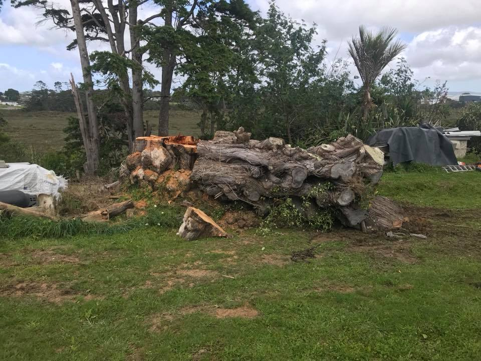 Tree Root Stump Grinder for Hire